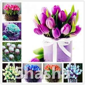 200 Stück Multifarious Tulip Bonsai Blumen-Samen, Perennial Tulip Bonsai-Garten-Blumen (Nicht Tulpenzwiebeln) Kräuter Pflanzen für Haus Garten