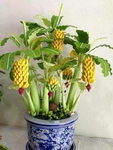 100 pezzi Dwarf Banana Bonsai Plant Seeds Albero albero, albero di frutta tropicale, Bonsai Balcone Fiore per la casa Piantatura del giardino, tasso di germinazione del 95%