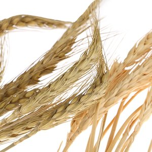 10pcs lot Hot NEW Artificial Wheat Ears Natural Dried Flowers For Wedding Party Decor DIY Craft Home Decoration