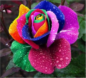 2020 Garden Plants New Varieties Colors Rose Pink Purple Rose Seed - Color 100 Seeds Per Package Flower Seeds Home