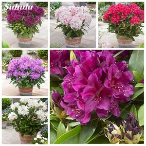 200 pc / sacchetto giapponese Azalea semi bonsai da interno Rhododendron Fiore Ufficio delle piante in vaso Desktop per Garden De Flores