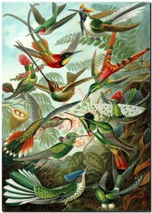Эрнст Геккель нуво старинные природа Колибри Home Decor ручная роспись HD печать маслом на холсте стены искусства холст картины 191118