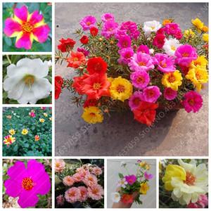 100 Pcs mixte couleur Moss-Rose pourpier Double Bonsai fleur pour la plantation (Portulaca grandiflora) Jardin Tolerant Facile croissance