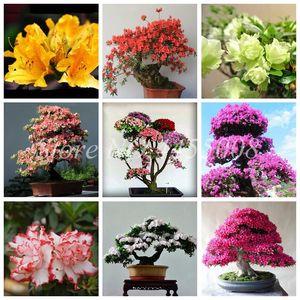 20 Adet / torba Tohumları Nadir Bonsai 16 Çeşitleri Azalea DIY Ev Bahçe Açık Bitkiler Sakura Japon Kiraz Blooms Saksı Gibi Görünüyor