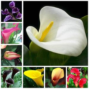 200 piezas Calla Lily semillas Bonsai habitación flores Zantedeschia Aethiopica al aire libre  plantas de interior hogar jardín planta decoración de la boda