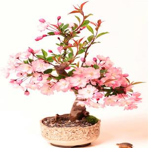 Sale!10 pcs pack Bonsai Tree japanese Sakura plant Rare Japanese Cherry Blossoms Flowers plant Seeds in Bonsai colourful Prunus Serrulata