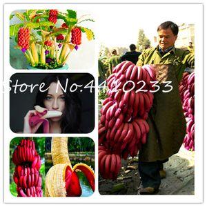 200 PC Raras semillas de plantas banano Red Bonsai fruta dulce perenne al aire libre Sabor plantas interesantes Leche deliciosa de la fruta Bonsai para el jardín