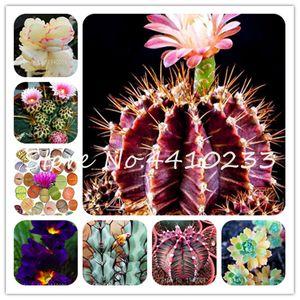 Редкой Мини 500Pcs Кактус Бонсай семена растений Rebutia Разнообразие Цветение Цвет Кактусы Rare Cactus Офис Мини сочная Бонсай Дешевый Китай Бонсай