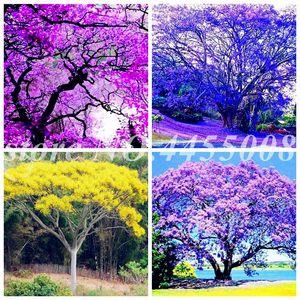 50 шт. Семена редкие Jacaranda Mimosifolia Tree Bonsai Открытый Жакаранский Цветочный сад Вечнозеленые кустарники для цветочных горшков для горшка.