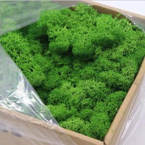 200g Reindeer Moss preservada Floral Moss decorativa para vestir vasos de plantas, Fada do jardim, Terrariums e muitas outras Crafts