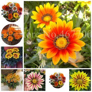 بيع 500 قطع بذور غازستانيا رائع جامص بونساي أفريقيا نادرة زهرة النبات ل diy المنزل حديقة زهرة وعاء المزارعون اللوازم سهلة تنمو
