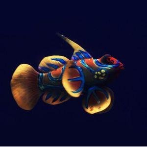 Силиконовые аквариумные лягушки украшения рыбы искусственные рыбы светящиеся зеленые acuario декор довольно милый микро орнамент для бака