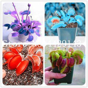semillas de plantas en maceta 100 unidades insectívoro planta de los bonsai Dionaea gigantes de clip de Venus atrapamoscas bonsai flor Para el hogar Jardín envío