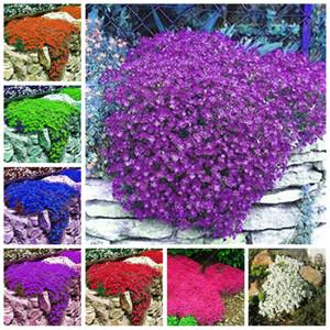 100 шт. BONSAI AUBRIETA CULTORUM CULTORUM редкое смешанное наземное покрытие Perennial Creeper Rock Creess Цветок в горшке Домашнее садовое растение легко растет