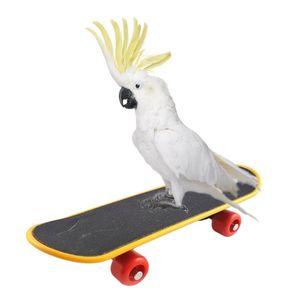 Pet Bird Toys Parrot Intelligence Mini Skateboard Budgies Parakeet Stand Perch Toy Bird Educational Training Accessories