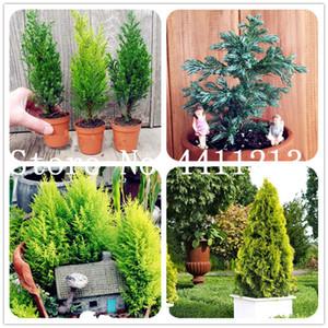 50Pcs Seltene Zypressen Bonsai Pflanzensamen, Conifer Zypresse, Evergreen Landschaft Pflanze, 100% Reales Topfpflanze für Hausgarten-Easy Grow