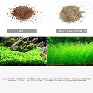 수족관 식물 씨앗 수생 식물로 수생 물 잔디 장식 수조 전경 식물 홈 장식 잔디 씨앗