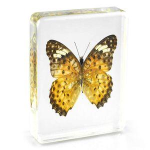 Spécimens de papillons léopard résine acrylique incorporé réel papillon jouets d'apprentissage souris transparente Paperweight populaire étudiant Science Kits