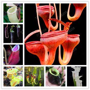 500 جهاز كمبيوتر شخصى Dionaea Muscipula العملاق كليب بذور فينوس صائدة الذباب مزروع الحشرات النباتية مصيدة الذباب بونساي بونساي لحديقة