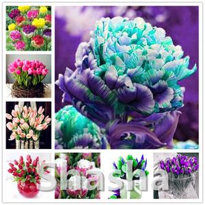 Bonsai 100 Stück Bonsai Tulip (nicht Tulip Zwiebeln) 20 Sorten Regenbogen-Tulpe Hochgradige Blume Topfpflanze Schönsten * Bunte