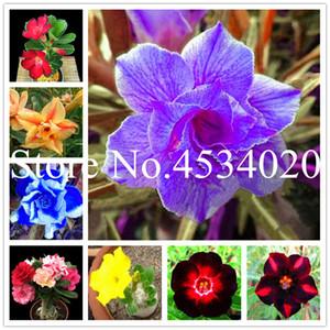 5 Adet Karışık 6 Türleri Çok Katmanlı Ucuz Adenium obesum Desert Rose bonsai seeds- Ev Bahçe Bonsai Çiçek Bitkiler ofis masaüstü kullanımı