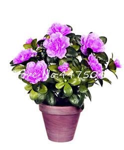 Satış! torba Japon Tohumlar Rhododendron Bonsai, Rhododendron Azalea Açık Çiçek Bonsai Ağacı DIY Bitki Ev Bahçe Kolay Grow başına 500 adet