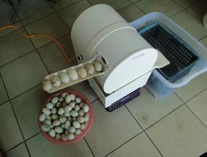 Vente chaude en acier inoxydable Nettoyage Œuf eau recyclée lave-linge / Egg Laveuse / canard machine de nettoyage des oeufs