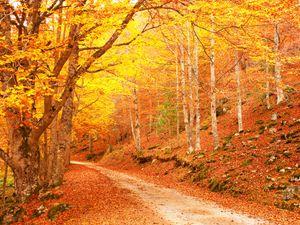 Fotografía Camino del otoño paisaje de vinilo Backdrops Árboles forestales bellos fondos de Photo Booth para la boda Estudio Puntales