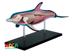 Dolphin 4d Maître Puzzle Assemblage Biologie animale Jouet Modèle d'orgue Anatomical modèle d'enseignement médical