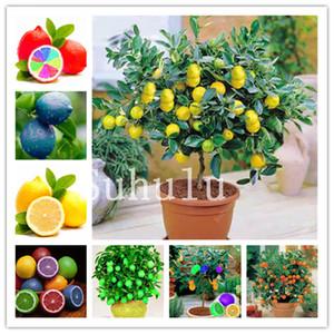 50 pezzi di limone bonsai semi arancio in vaso commestibile mandarino Agrumi nano Orange Tree Indoor Plant Per le piante di giardino domestiche Can commestibile