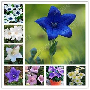 100 Pcs Graines mixte Bonsai Crape Myrtle -Shrub Lagerstroemia vivaces Courtyard Myrtle Fleurs en plein air Bonsai Diy jardin des plantes