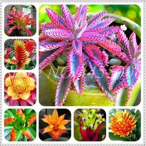 Rare Purple Bromeliad Tillandsia Bulbosa Air Plant Very Easy Growing Lazy Plant Bonsai For Home Garden 200 Pcs Seeds