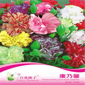 1 pack Original package Carnation Dianthus Potted Flower bonsai plant flower seeds Heirloom flower Pink Hardy Perennial Plant Hot sale NO61