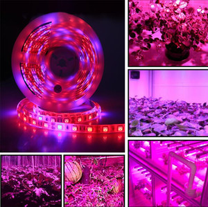 DC 12 V LED Büyümek ışık Tam Spektrum 5 M LED Şerit işık 5050 Sera Topraksız Bitki Büyüyen Için Phyto Bitki Büyüme lambaları