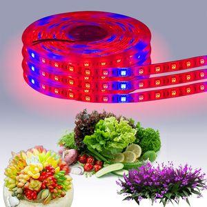 LED coltiva striscia luminosa a LED 12V Blu Rosso luce impermeabile luce pianta alla produzione di serra idroponica vegetale che cresce lampada 1 M 60 LED