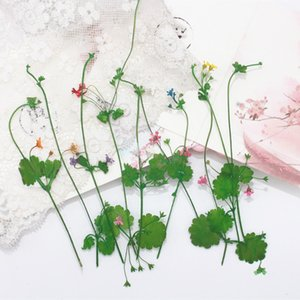 6pcs pack Resin Decorative Sticker Micro Landscape DIY Mold badge pendant Making Sticker Dried flowers plants Handmade