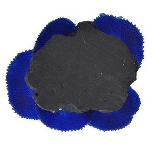 수족관 식물 인공 산호 블루 기타 수족관 물고기