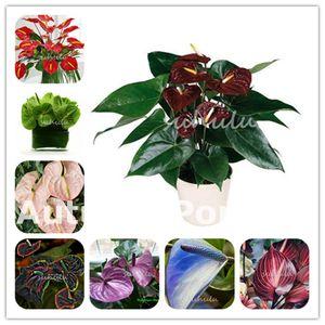 1000 قطعة نادرة أنثوريوم زهرة النباتات بذور داخلي بونساي شرفة بوعاء النباتات anthurium زهرة فلوريس ل diy الرئيسية حديقة سهلة النمو