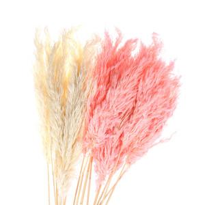 1Pc  Bouquet Dried Plants Pampas Grass Natural Phragmites Communis Wedding Flower Bunch