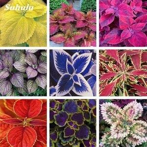 Hot Sale 200 pcs Seeds Rare Exotic Coleus Bonsai Flowers Potted Bonsai Garden Courtyard Balcony Mix Colors Begonia Flower Plants