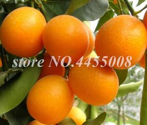 100 Pcs Kumquat Arbre Graines Bonsaï Balcon Patio En Pot Fruits Arbre Savoureux Juteux Orange D'Agrumes Balcon Flores En Pot De Noël Ornements