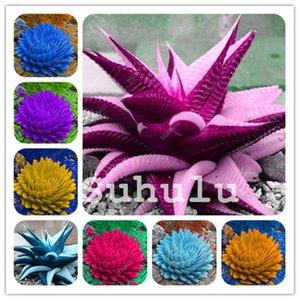 500 pezzi Ortaggi e frutta Bonsai Aloe Vera pianta commestibile Semi Beauty Cosmetic Bonsai Herb Pianta grassa Per la casa Giardino