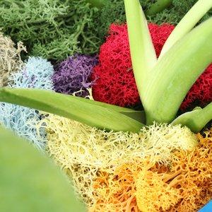 1bag Artificial Natural Reindeer Moss preservadas secas Artesanato Flor Estame Para Fada Jardim Home Decor Festa de casamento Garland