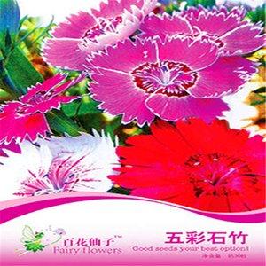 1 paket Orijinal paket Dianthus çiçek bonsai bitki çiçek tohumları Heirloom Dianthus çiçek Ağacı Hardy Çok yıllık Bonsai Bitkisi Sıcak satış NO59
