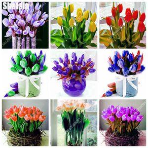 New Rare viola tulipano vero bel fiore (non Tulipano Lampadina) Bonsai crescita naturale piante per la Casa Giardino Piantare 200 pz / borsa semi