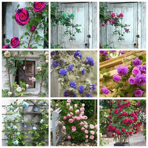 Vente chaude! 500 pièces rares graines de plantes Rose Tree Bomsai fleur Mini Tree Climbing Rose Mini coloré Bonsai Rose fleur pour jardin en pot