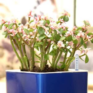 4 Stück Pflanze Feuchtigkeitsmesser Wasserstandsanzeige Wasser Guage Für Pflanzen - 20cm 22.5cm