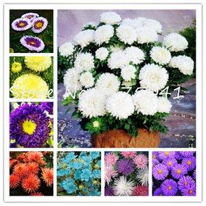 100Pcs Aster Fiore bonsai semi di piante, colorato crisantemo perenne Bonsai Fiore Pianta in vaso Per la casa giardino purificare l'aria Resistente