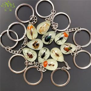 10pcs crabe scorpion porte-clés briller dans le noir véritable insecte porte-clés coléoptère porte-clés pour hommes clé spécimens de collecte bibelots