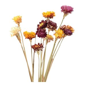 Practical 20Pcs Dried Flower Daisy Natural Artificial Flower Colorful Chrysanthemum Ornament Garden Straw Stalk Wedding Party Ho